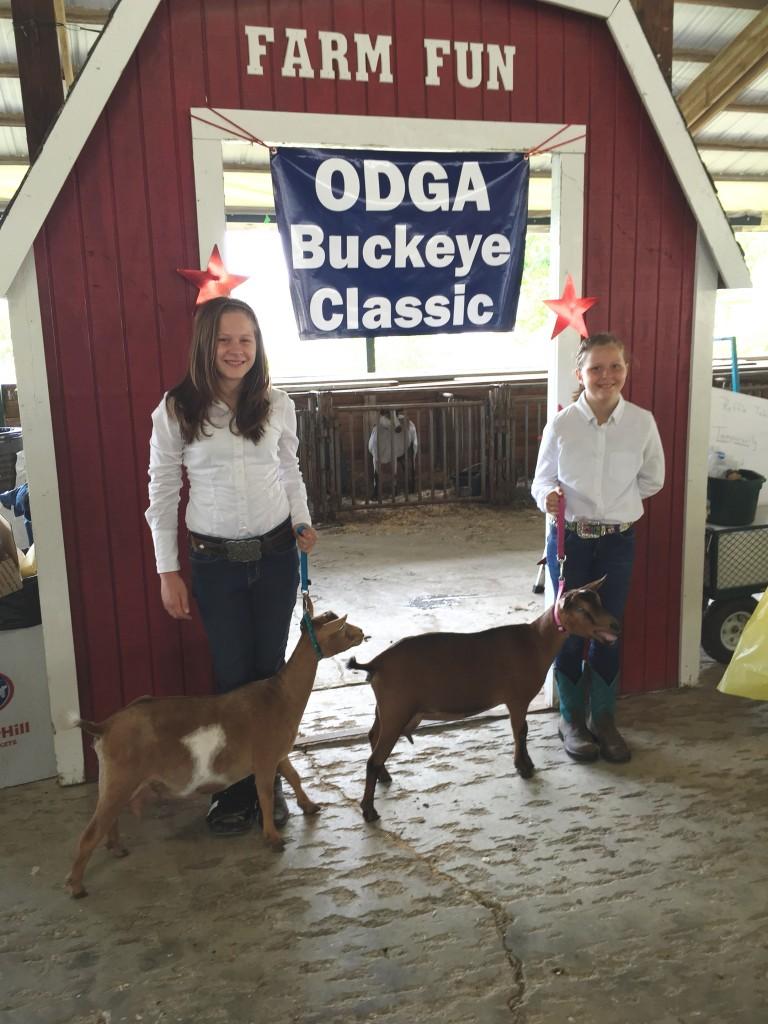 Goat Show 1
